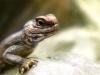 lizard_head