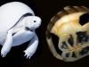 tortoise_wip